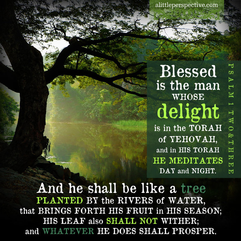 Psalm1-Tree-SDGchannel-Happiness-God